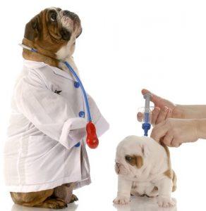 Vaccino cane Camparada