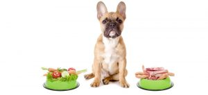 Alimentazione cane Camparada
